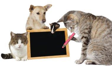 Cat writing on a blank blackboard