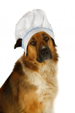 Big dog with a chefs hat