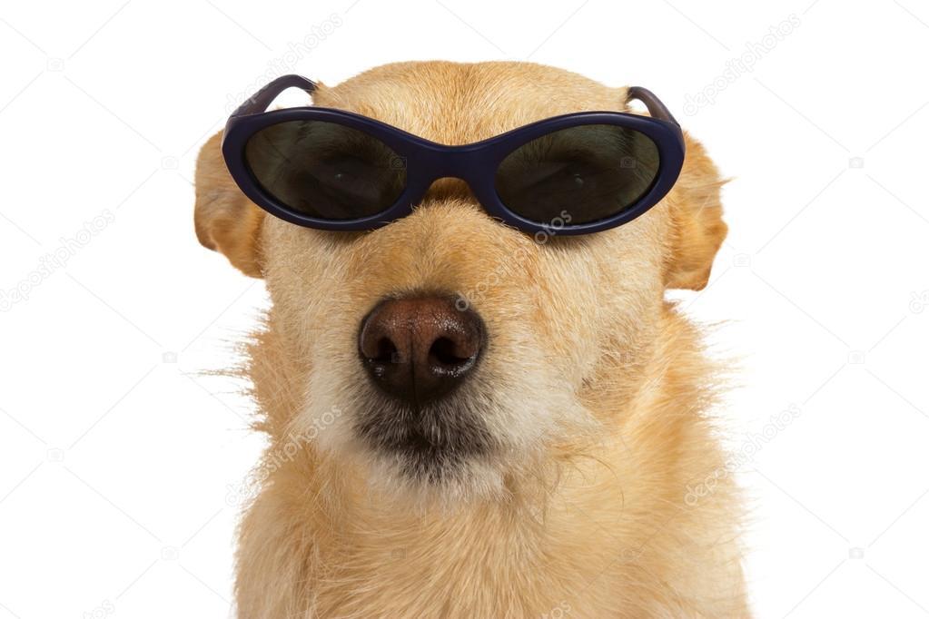 Adorável cachorrinho legal cara de óculos sentado olhando para a câmera  isolada no branco — Foto de MartinaOsmy 91bad52fb2