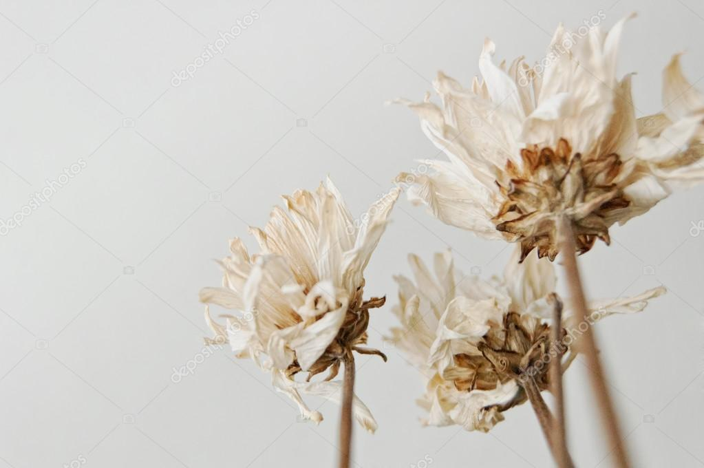Dead Flowers Bouquet — Stock Photo © Weat #33707283