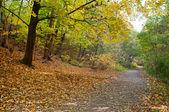 podzimní turistická stezka