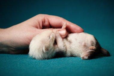 Holding hand - little ferret