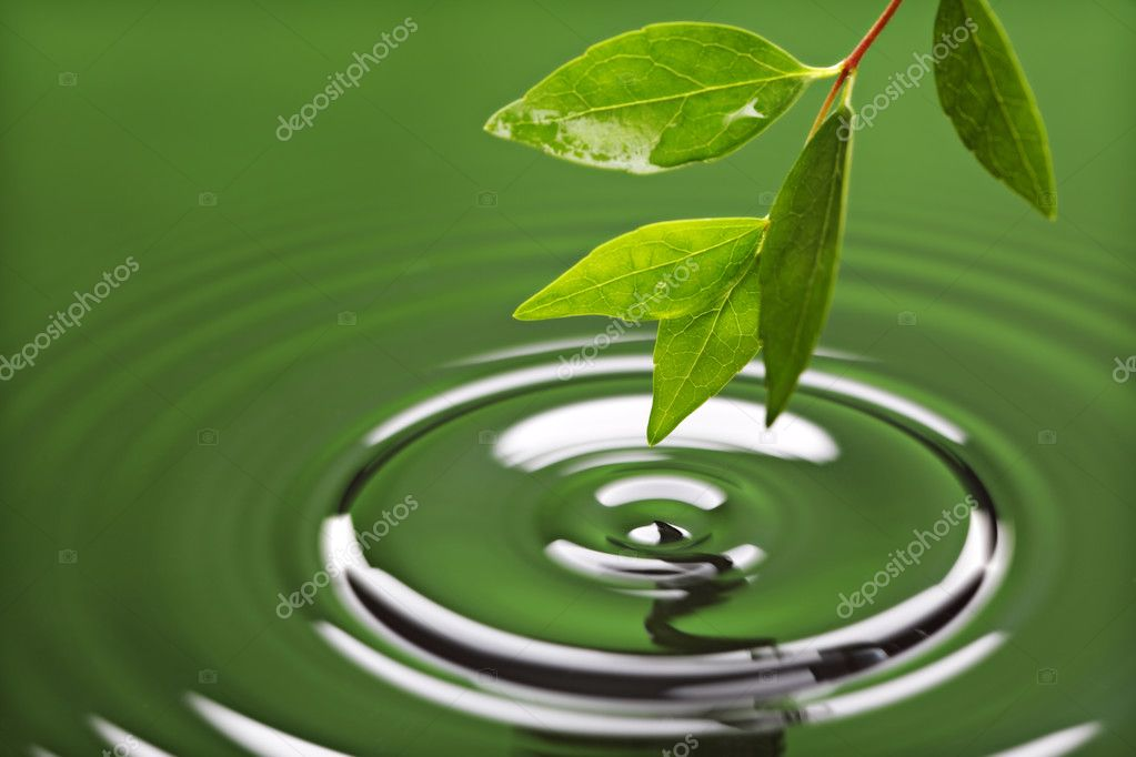 Green leaf with water ripple