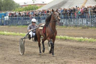 The participant of a horse race