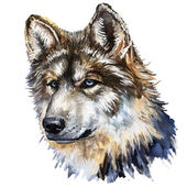 Fotografie wolf head