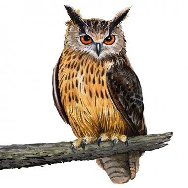 "Картина, постер, плакат, фотообои ""орлиная сова картина пейзаж живопись все"", артикул 29059855"