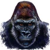 Photo Gorilla male