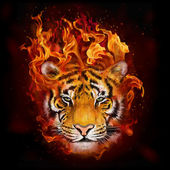 Fotografie head of a tiger in flames