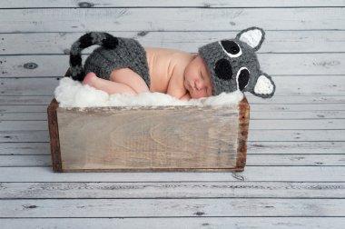 Newborn Baby Boy in a Raccoon Costume