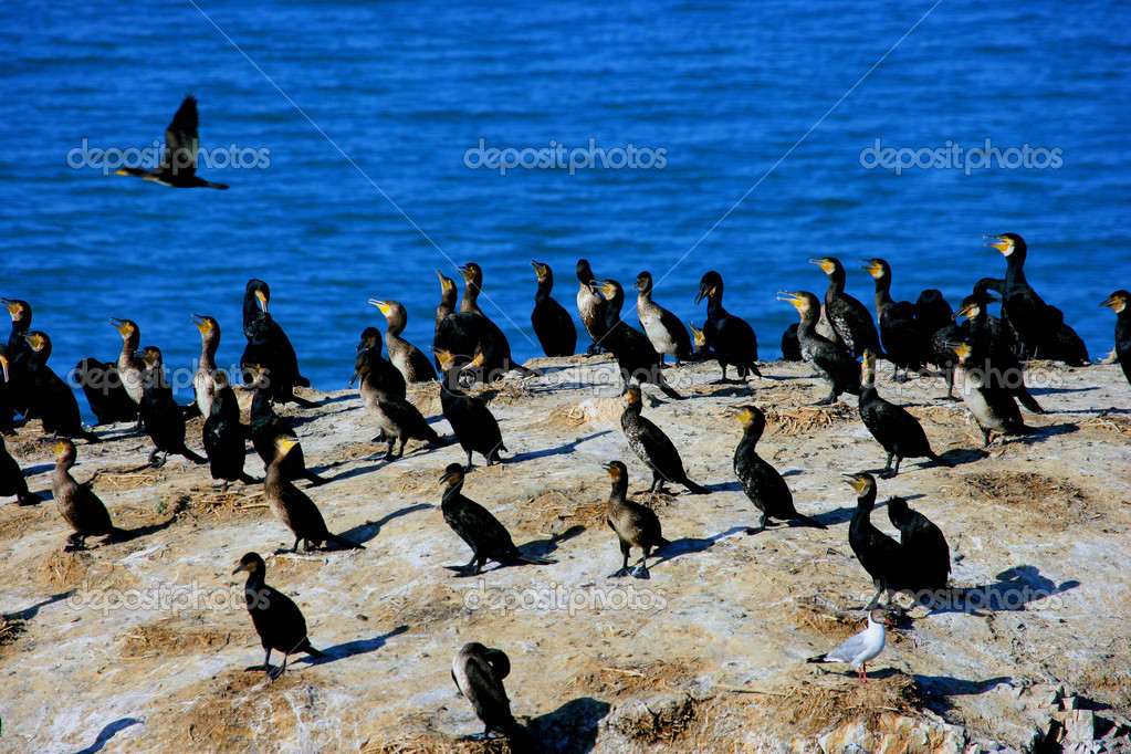 lake cormorant dating Welcome to the lake cormorant jv football team wall the most current information will appear at the top of the wall dating back to prior seasons utilize the left navigation tools to find past seasons, game schedules, rosters and more.