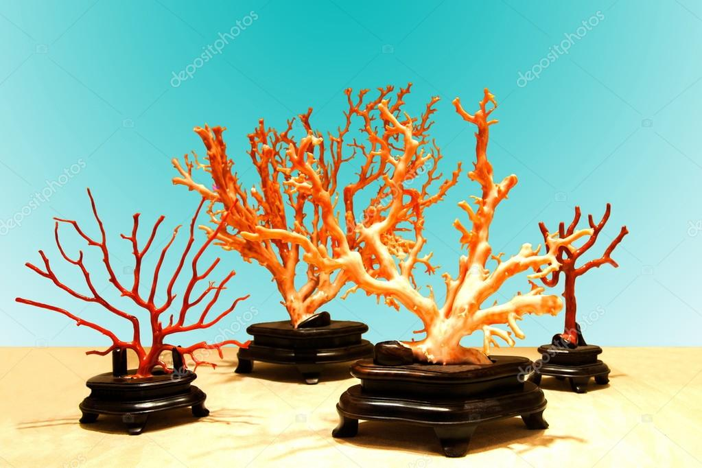 Taitung City Coral exhibition center exhibition of precious red coral