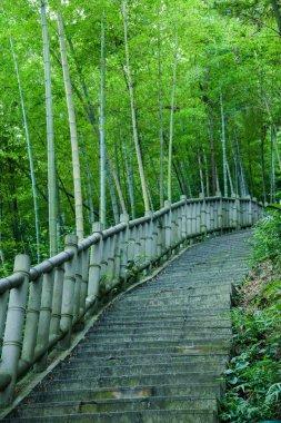 Yongchuan District, Chongqing Dasan Bamboo Bamboo Scenic
