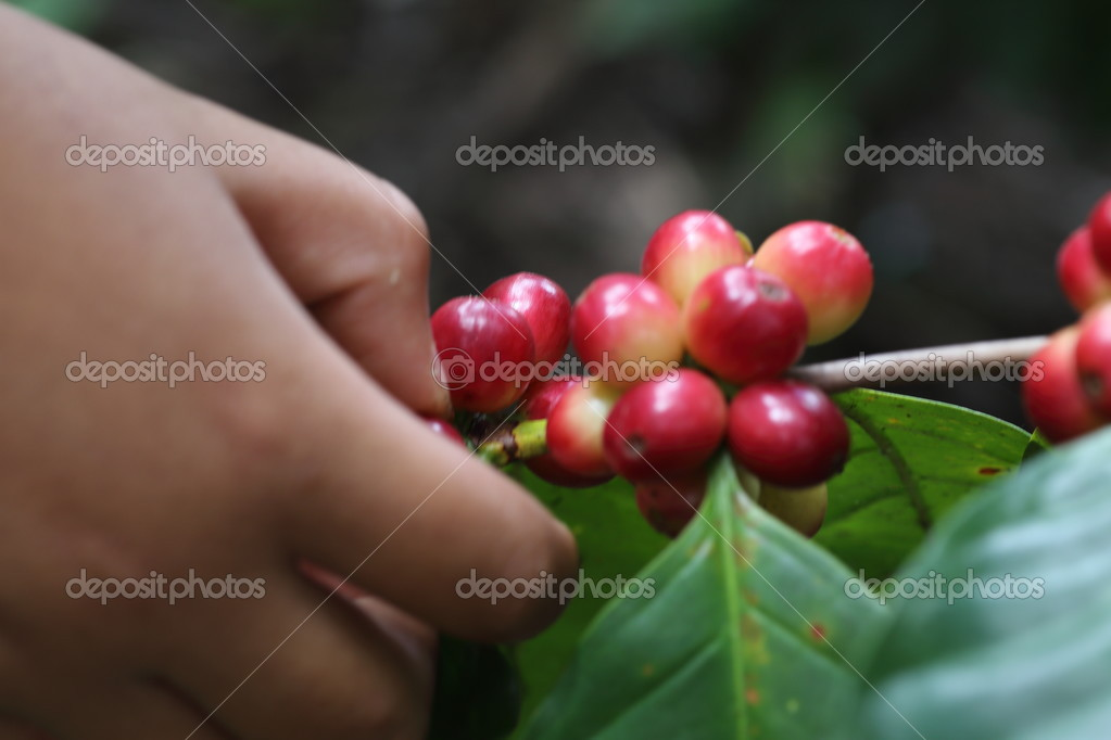 Natural coffee with hand