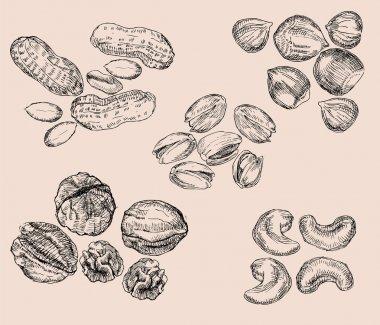Hand Drawn Nuts
