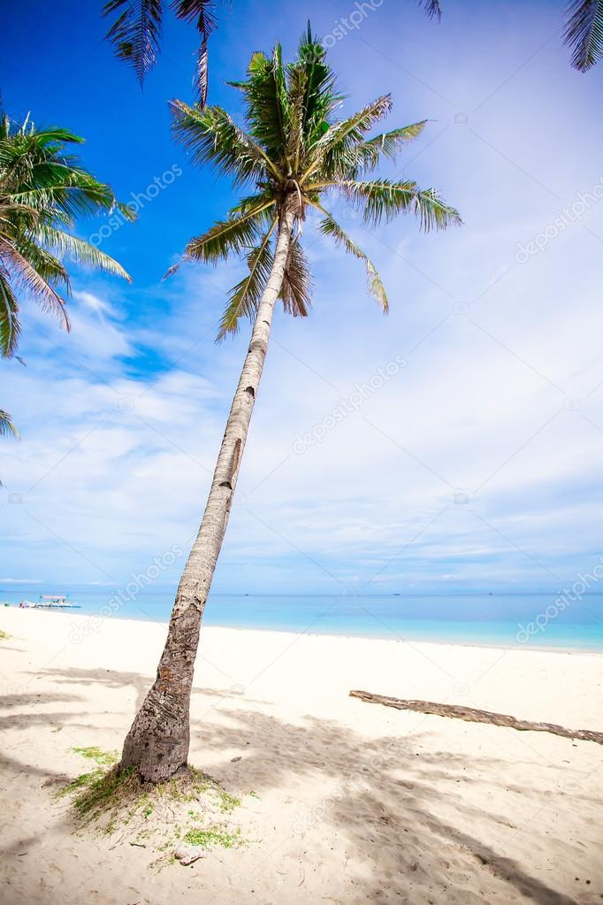Albero di palma di cocco sulla spiaggia di sabbia sfondo - Palma di cocco ...