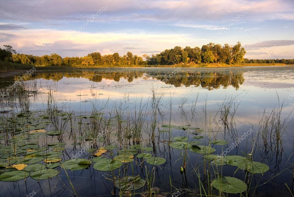 Lily pads and reeds on calm reflected lake, Minnesota, home of 10,000 lakes, USA