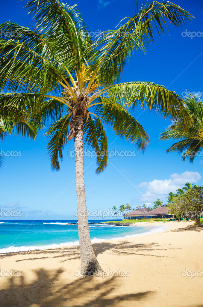 Matrimonio Sulla Spiaggia Alle Hawaii : Palme sulla spiaggia alle hawaii — foto stock ellensmile