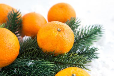 Fresh tangerine with spruce branch