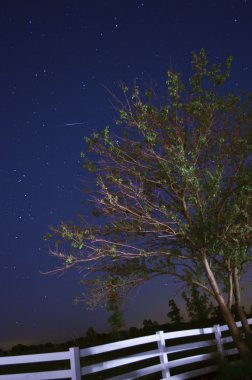 Star Trails & Tree