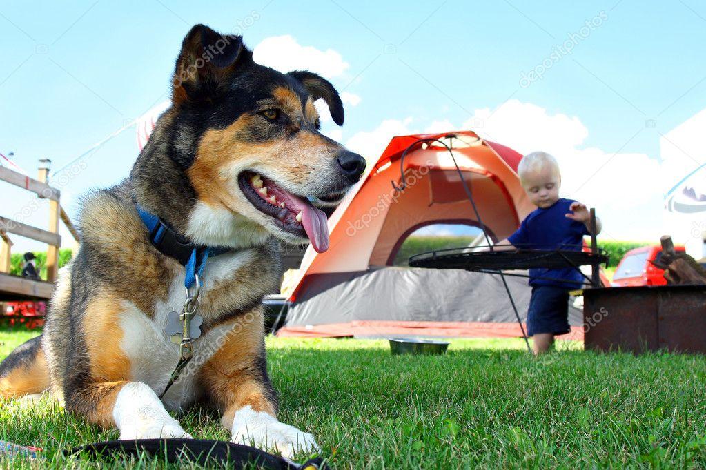 Friendly Dog Camping