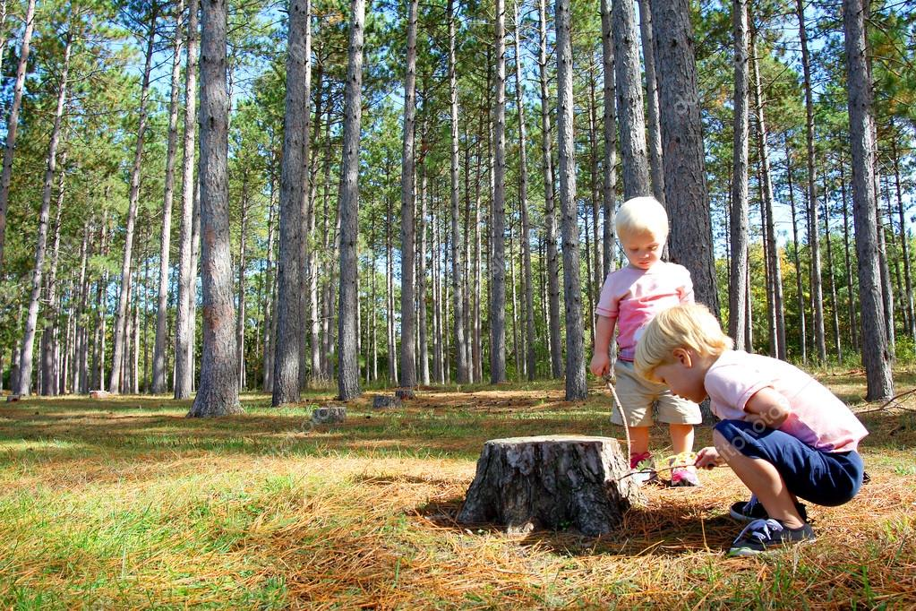 Two Young Children Exploring in Pine Tree Forest