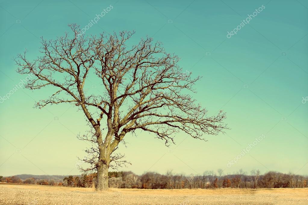 Одинокие голые ветки зимы в деревне — Стоковое фото ...