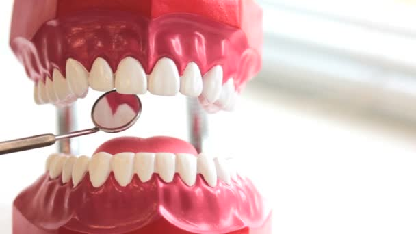 Dentist inspects teeth of toy jaw by mirror at dental surgery, closeup view