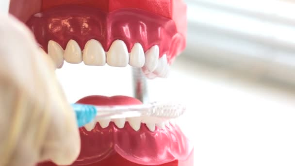 Teeth brush cleans toy jaw on table in dental surgery. Copyspace.