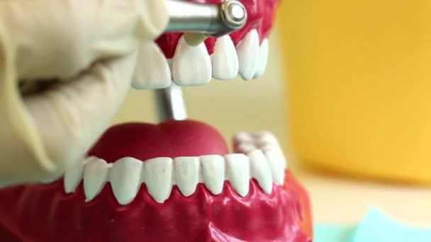 zubní ošetření na příklad hračky čelisti