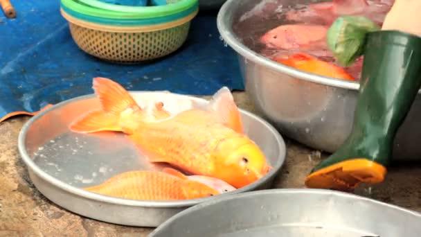 Alive freshwater fish, carps, for sale at market.