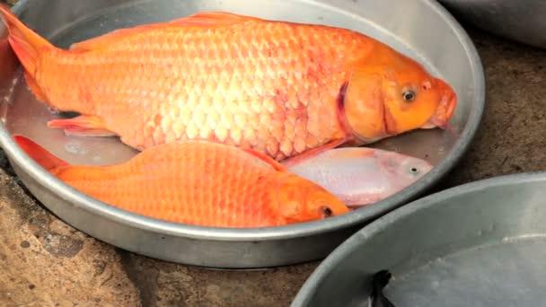 živé sladkovodní ryby, kapři, k prodeji na trhu