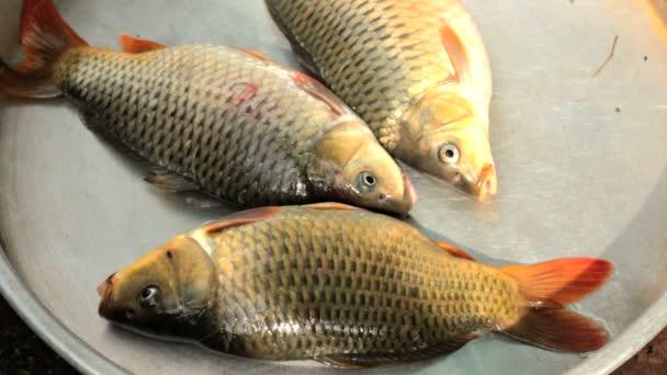 élve az édesvízi halak, pontyfélék, családi házak és villák-nak Eladó-piac.