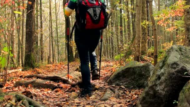 donna giovane turista escursioni via, attraverso la fitta foresta