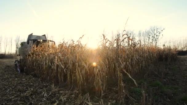 výroby potravin, potraviny, osiva obilovin mlýn-kukuřice