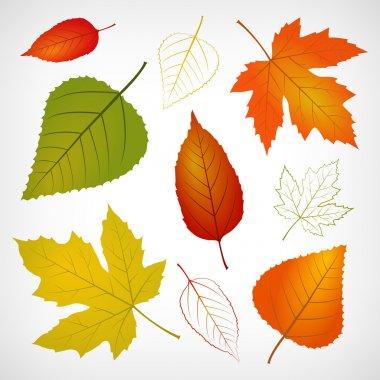 Autumn vector leaf