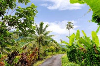 Path in Tahiti