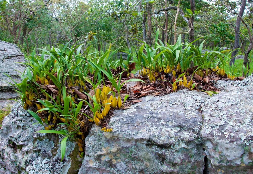Wild orchid plants on the rocks