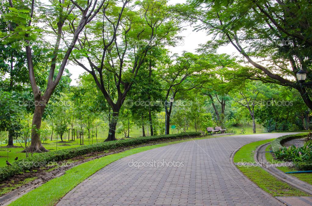 公园里的树木运动的行人天桥 图库照片 169 Casanowe1#39811581