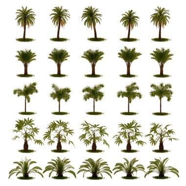 3D Set of Palm Tree