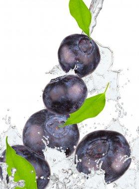 Splash with fruits
