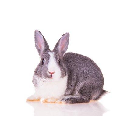 """Картина, постер, плакат, фотообои """"пасхальный кролик"""", артикул 39839791"""
