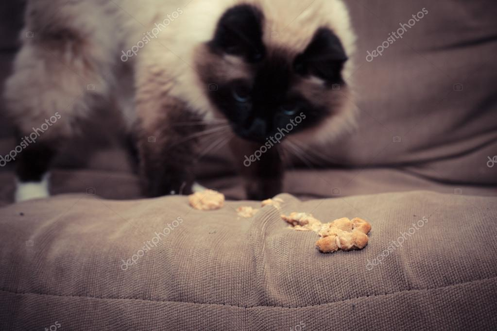 Cat not eating kidney problems