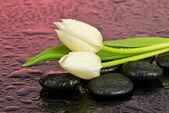 Tulpaner på stenar till spa