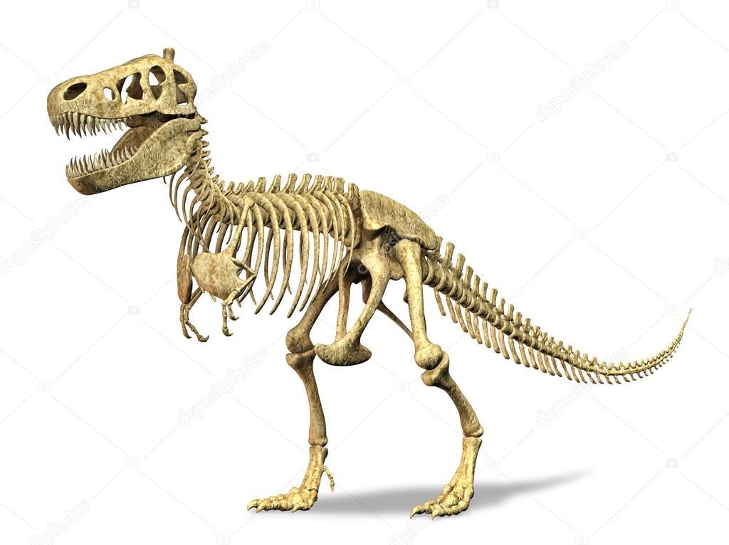 dibujo de esqueleto de tiranosaurio rex esqueleto de t rex sobre