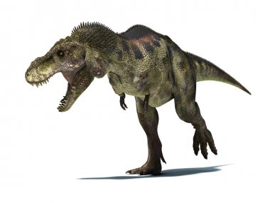 Tyrannosaurus Rex, isolated on white background with clipping pa