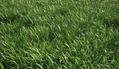 Fotografia erba prato, vista stretta