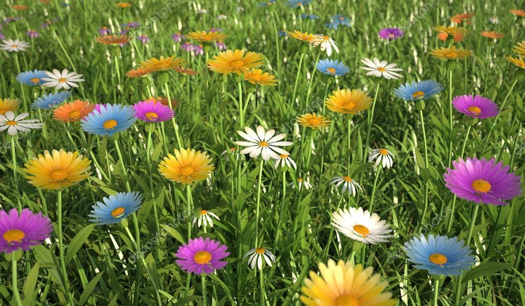 Fiori di colori diversi in un campo di erba foto stock - Diversi tipi di erba ...