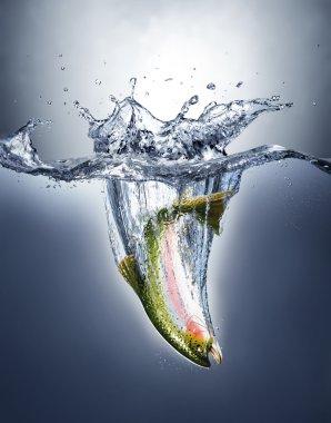 Salmon fish splashing into water forming a crown splash.