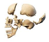 lidská lebka s částmi explodovalo
