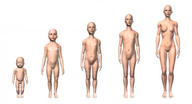 Human body scheme of different ages stages.